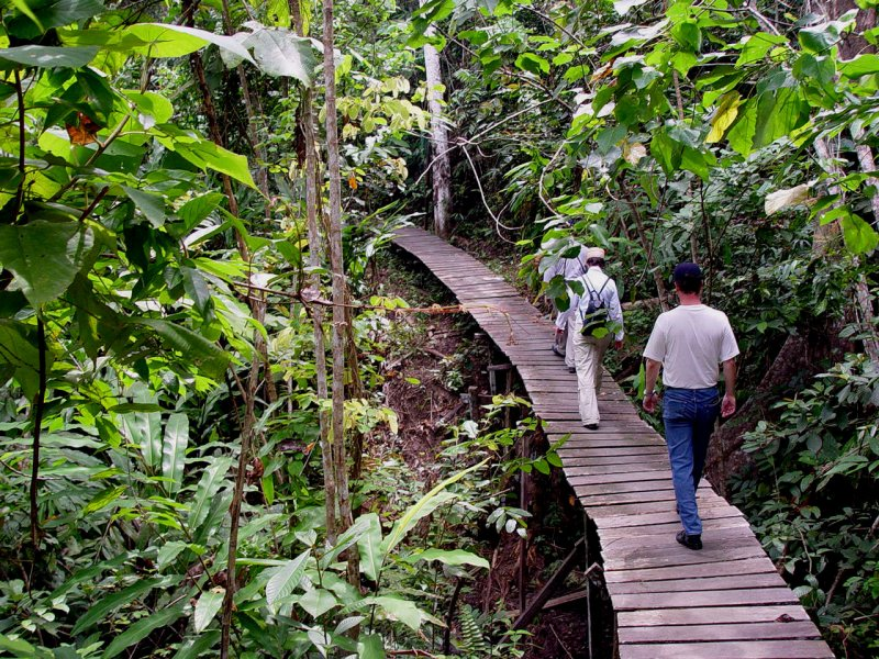 Trekkers in Kutai Jungle Boardwalk